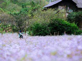 Nhiều địa điểm du lịch tại Mai Châu du khách có thể chiêm ngưỡng