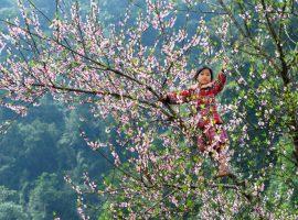 Du lịch Mai Châu mùa hoa đào nở