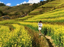 Mai Châu có mùa hoa cải đẹp như thơ