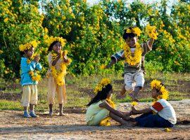 Đến Mộc Châu mùa nào đẹp nhất - Mùa hoa dã quỳ nở