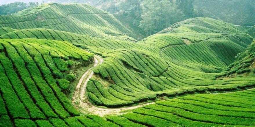 Tour du lịch Hà Nội Mai Châu Mộc Châu 1 ngày là sự lựa chọn thích hợp cho những du khách bận rộn