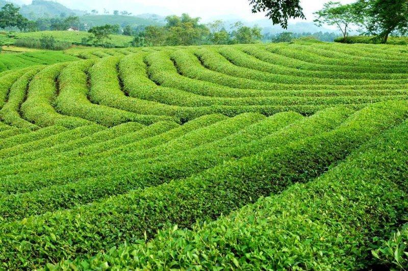 Tham gia tour du lịch Hà Nội Mai Châu 1 ngày du khách có cơ hội ngắm nhìn vẻ đẹp thiên nhiên yên bình và thơ mộng
